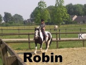 i-robin1