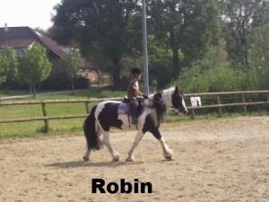 i-robin2