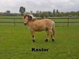 p-kastor