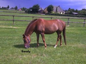 p-sandy