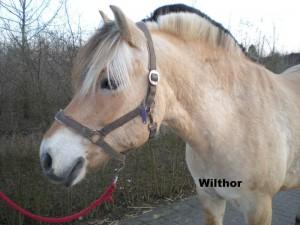 p-wilthor
